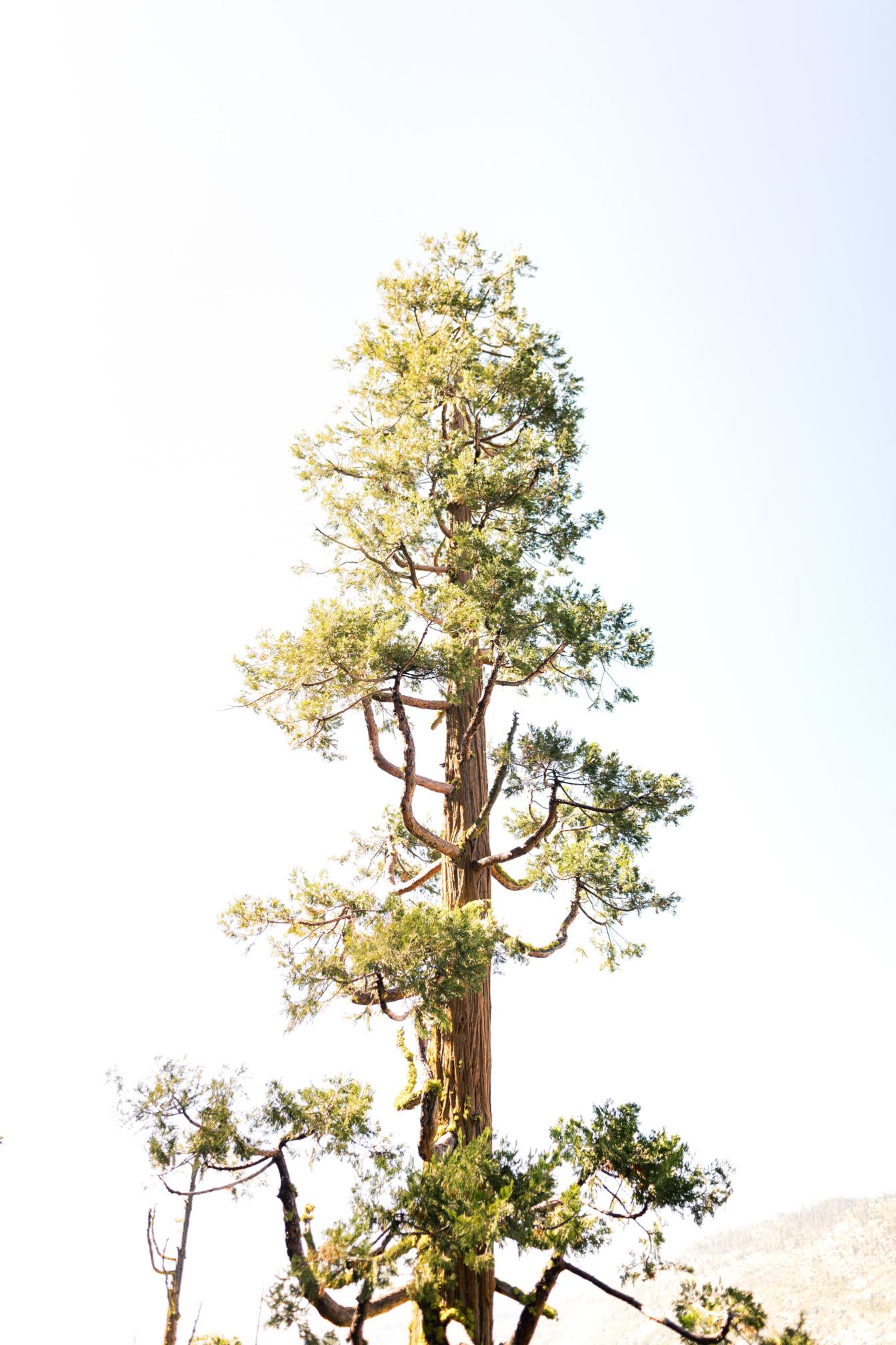 tuolumne-county-adventure-yosemite-99-18.jpg