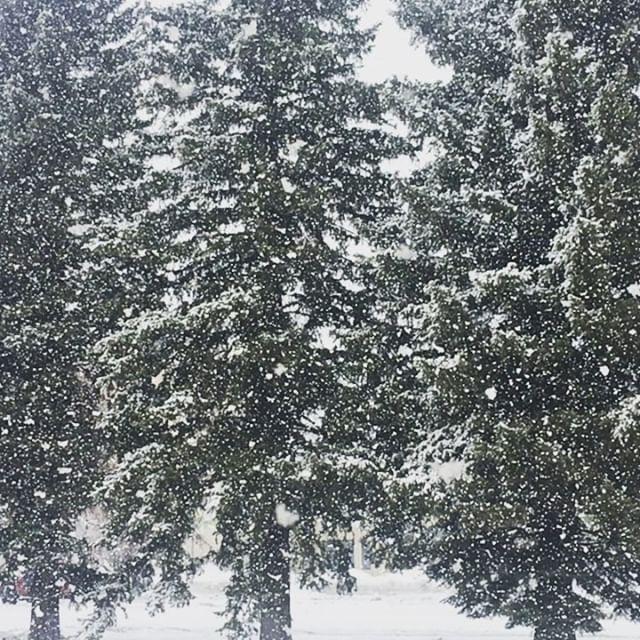 It's a winter wonderland! #winteringunnison #fatflakes #fallingsnow #slowmotion #bringit