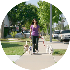 Best private dog walking in Costa Mesa, Irvine, Newport Beach, Newport Coast.