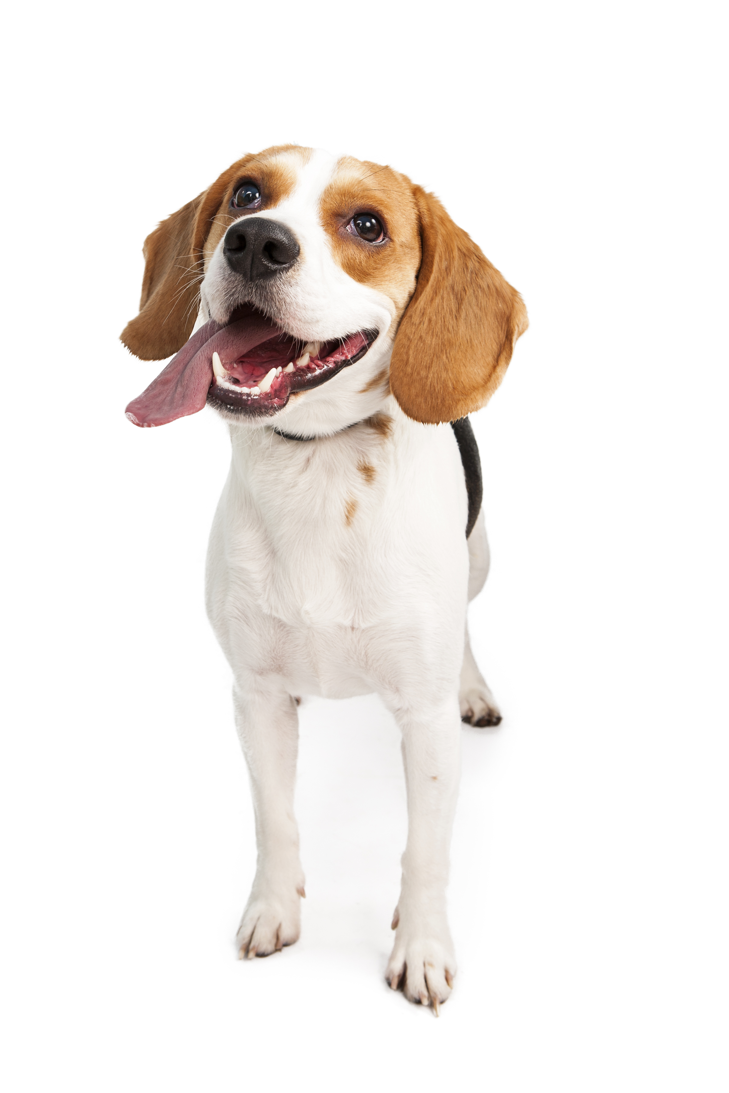 Hiring dog walker jobs in orange county, pet sitter, pet sitting job.