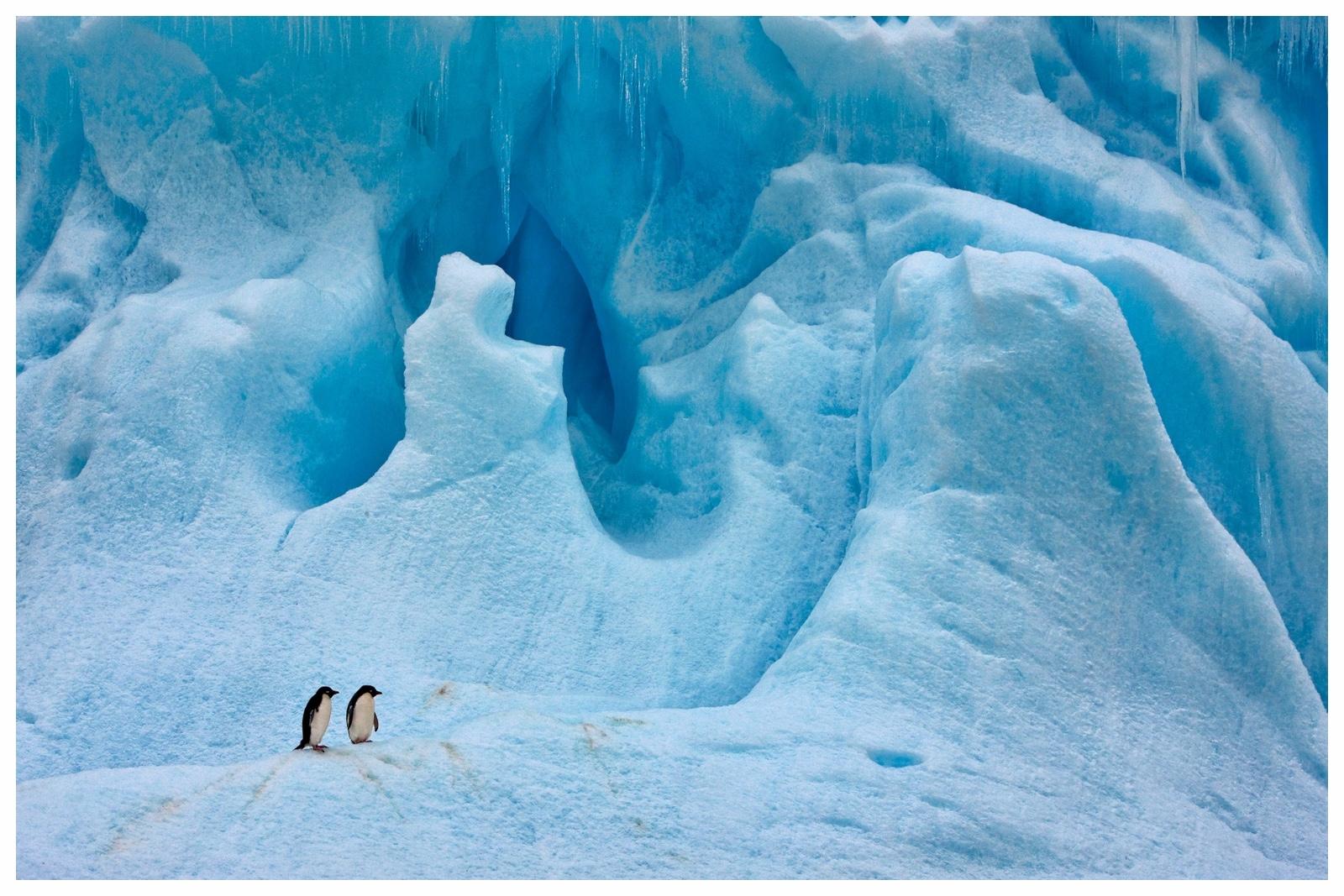 Arktis & AntarktisFaszination des ewigen Eises - Die Antarktis am Südpol ist so groß wie Australien und Europa zusammen, sie ist trockener als Arabien und höher gelegen als die Schweiz. An schönen Tagen ist es in der Heimat der Pinguine sonniger als in Kalifornien und doch kälter als im Gefrierfach eines Kühlschranks. Die Arktis am Nordpol ist dagegen ein von Eis bedecktes Meer. Sie ist die wilde Schatzkammer des Nordens, das Gebiet der Mitternachtssonne, der langen Polarnächte und das Reich der Eisbären. Diese beiden magischen Orte bieten Gästen Naturschauspiele, Erlebnisse und Aussichten, die in dieser Form nirgends auf der Welt zu finden sind. Wir organisieren Expeditionen grundsätzlich mit kleineren Schiffen, um eine ungezwungene Atmosphäre zu schaffen. Fernab von Captain's Dinner und Dresscode können Sie auch nur mit Ihrer Familie reisen - wir finden die perfekte Reiseplanung für Ihre Reise ins ewige Eis.