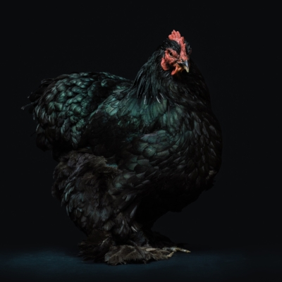 Perfect Poultry -