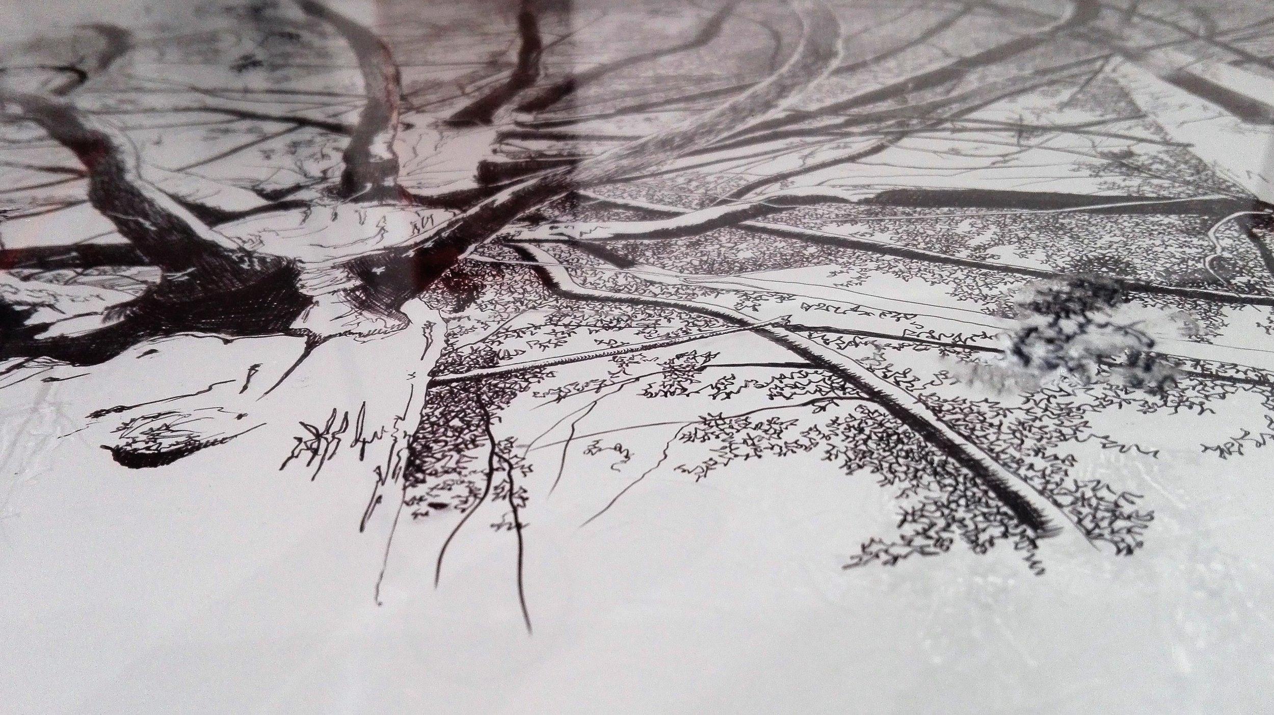 Mirant al cel  (detall)    Bolígraf Bic d/paper de pedra i rotulador permanent d/vitrina de metacrilat    69x101,5cm