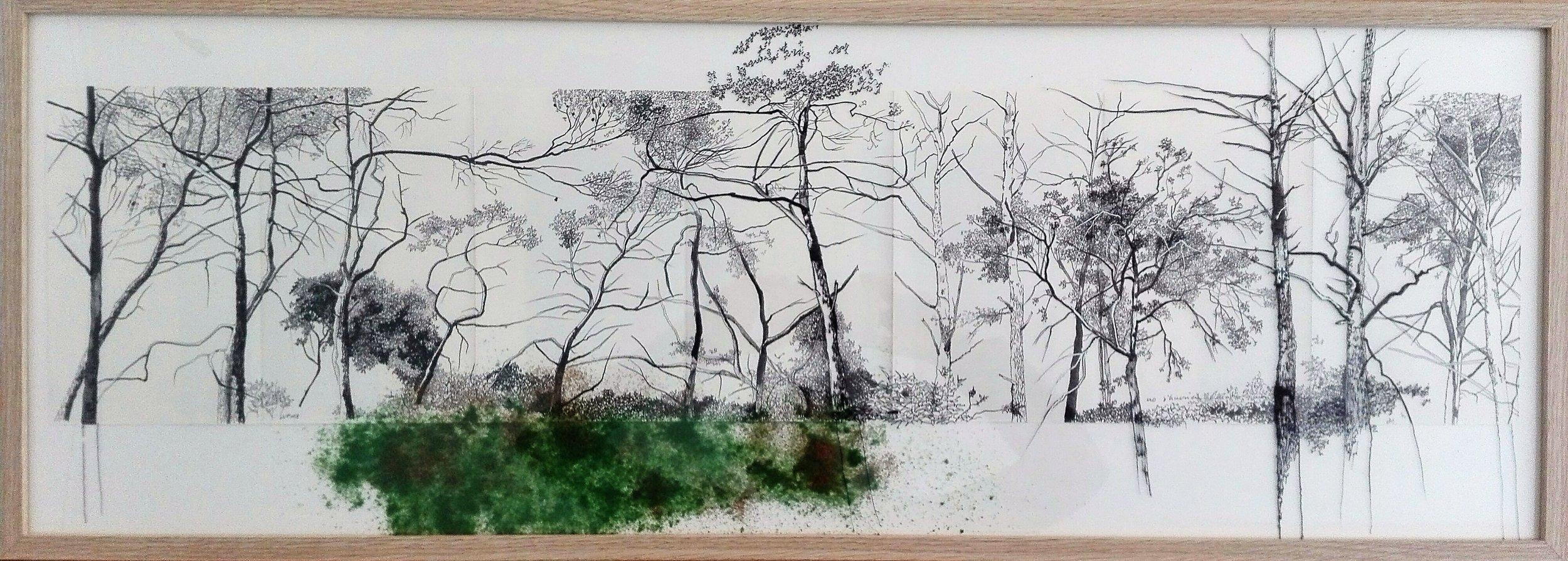 Camins de boscos I