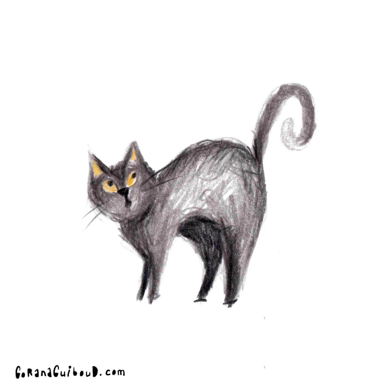 Katze-32.jpg