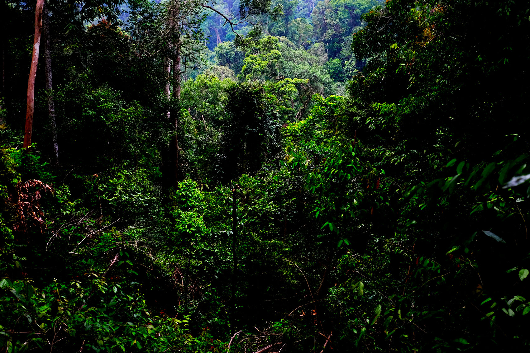 Jungle, indonesia