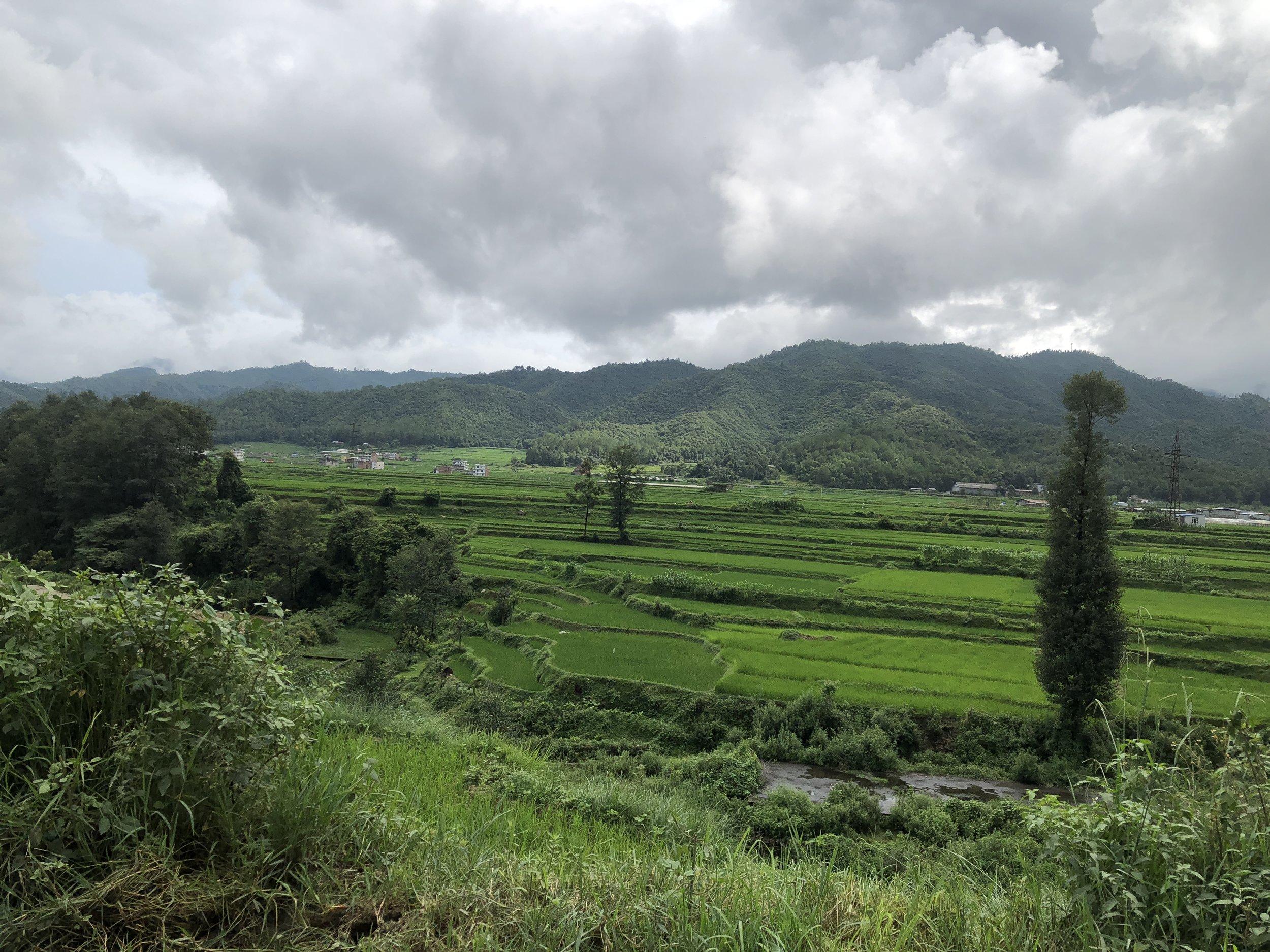 Rice Fields outside Kathmandu, Nepal