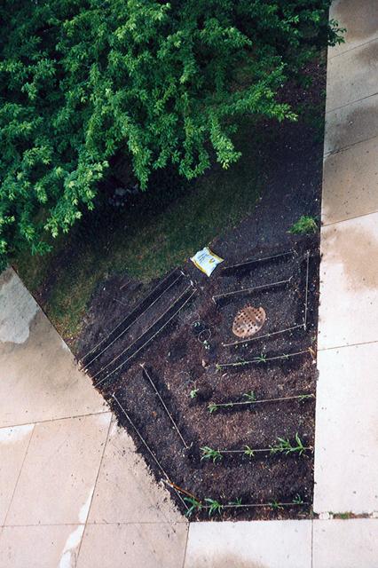 3 FS Phallic Shapped Vegtable Garden -aerial shot of  seedlings.jpg