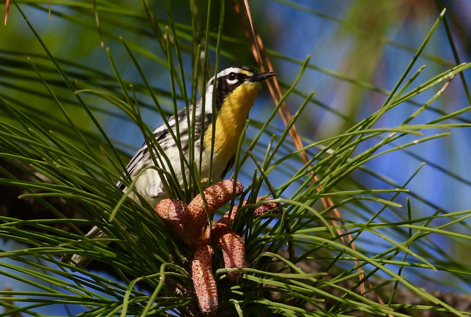 Birding Field Trips   with Jeff O'Connell   Learn More