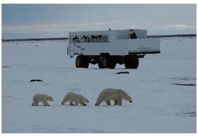 polar bear 5.jpg
