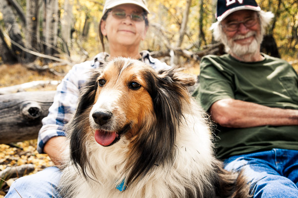 Sheltie with man and woman in background.