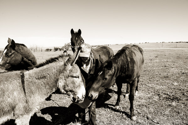 Woman in a pasture surrounded by horses wanting treats.