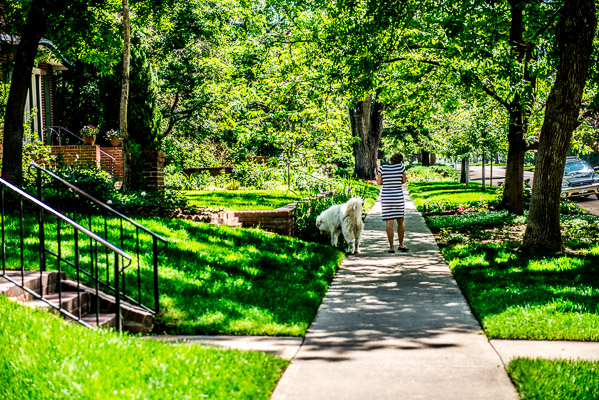 Lady walks her dog in Congress Park.