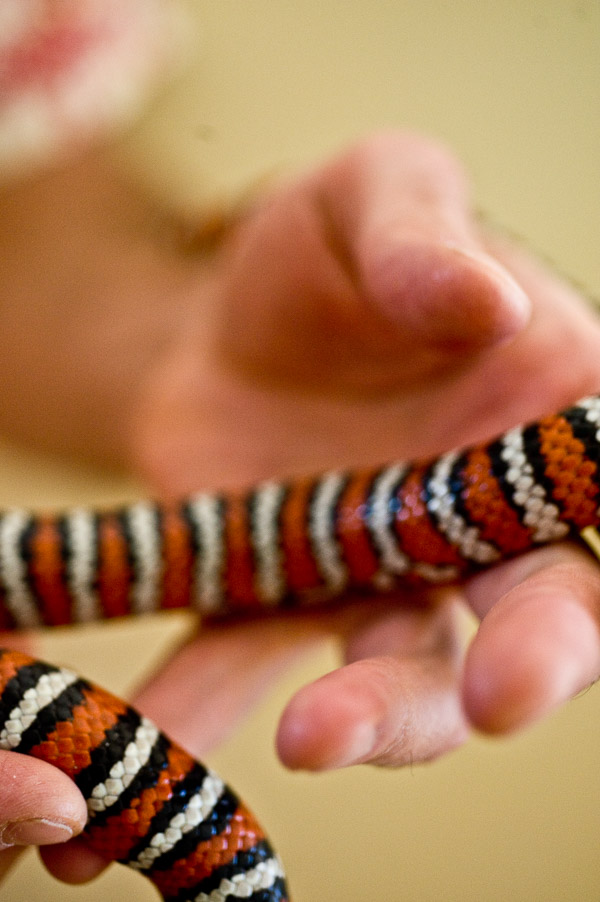 Artistic photo of snake and hand.
