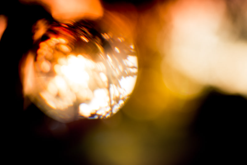 Willy-Wilson-Personal-Projects-Light-Entwined-1.jpg