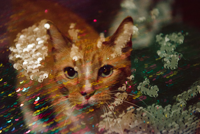 Willy-Wilson-Double-Exposure-86.jpg