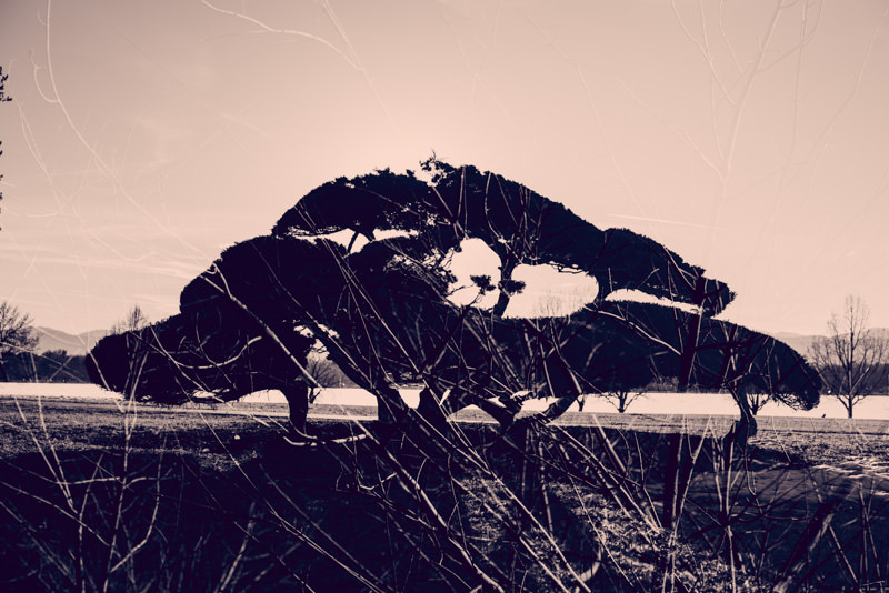 Willy-Wilson-Double-Exposure-18.jpg