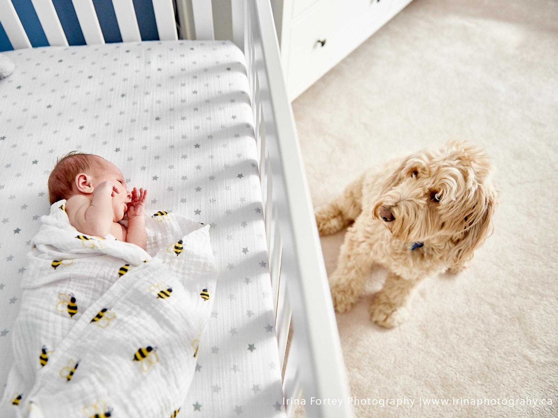 Quinn_newbornportraits4.jpg