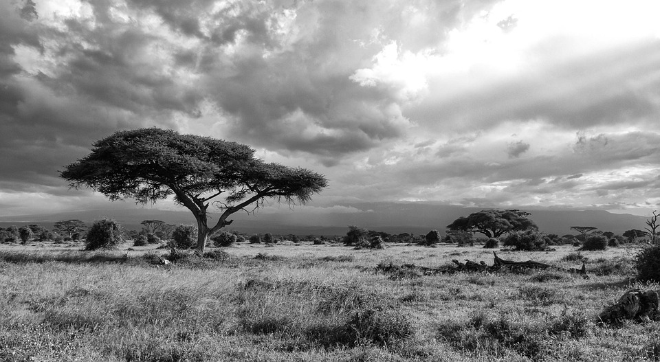 East-Africa-Nature-Kenya-Safari-Landscape-Africa-283868.jpg