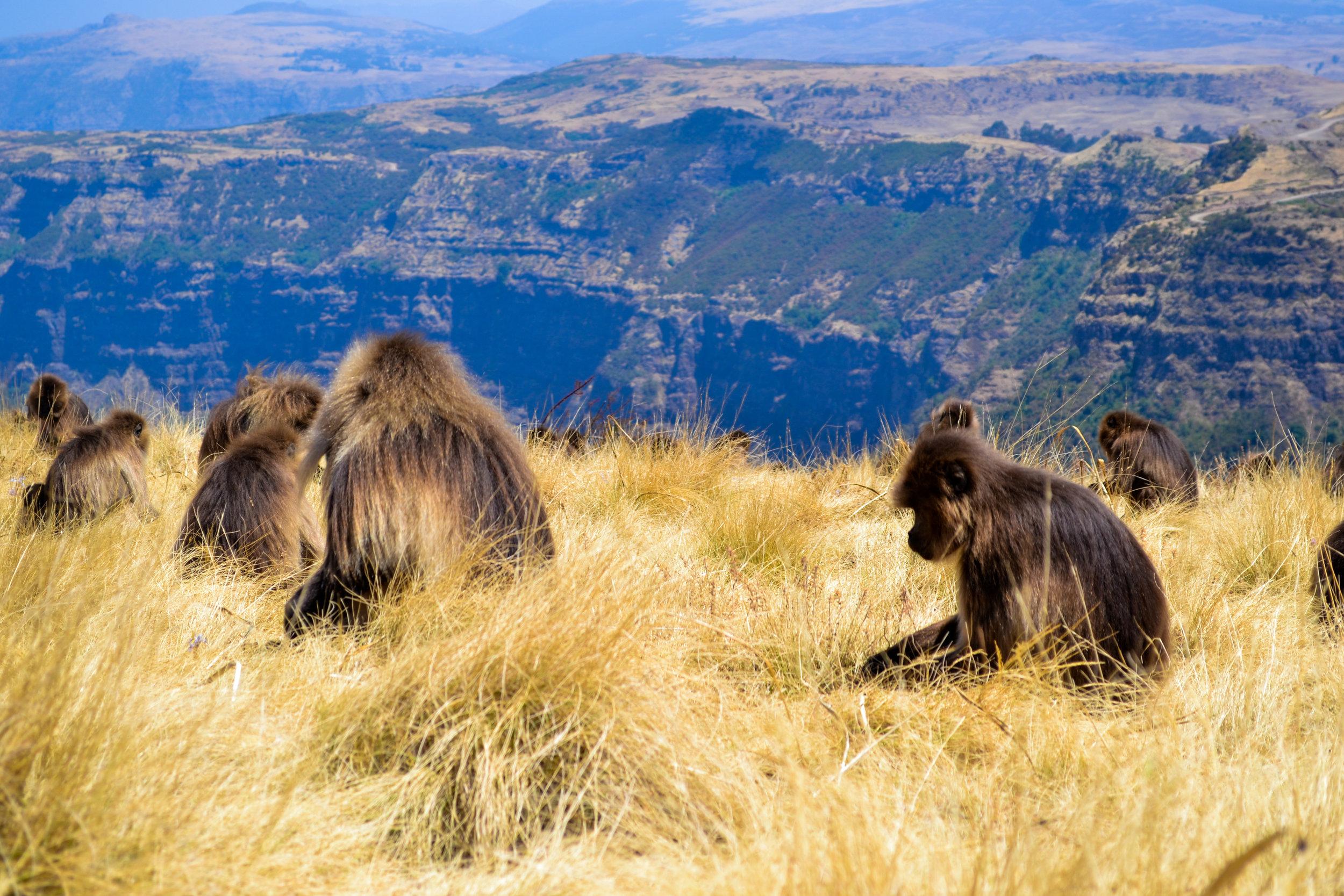 Gorgeous Ethiopia-13.jpg
