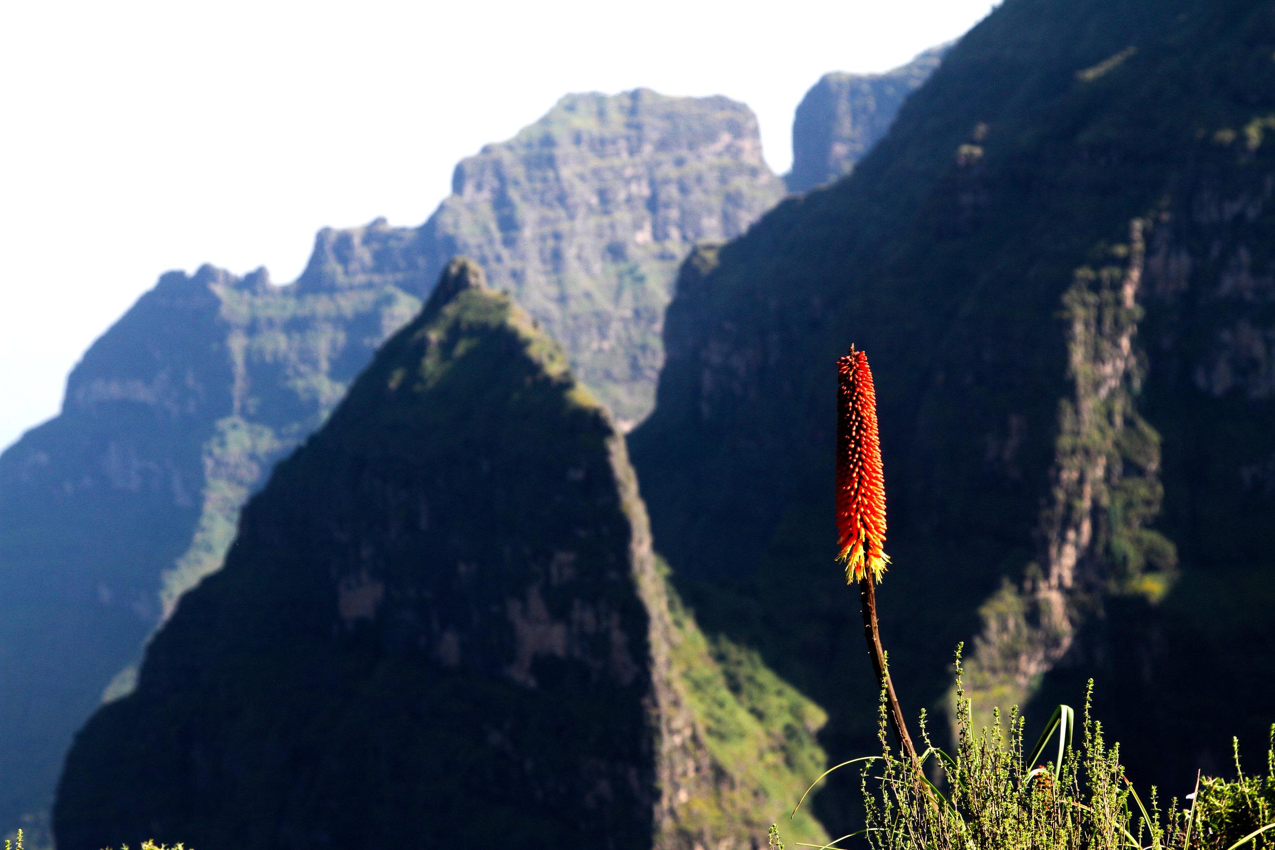 Gorgeous Ethiopia-51.jpg