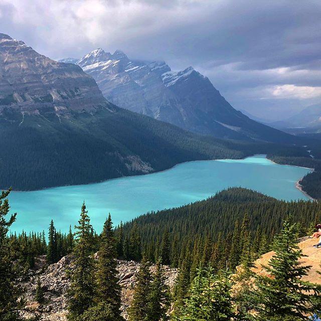 Peyto Lake #peytolake #canada #banffnationalpark #glacial #mountains #glaciallake #insane #travel #summerthrowback