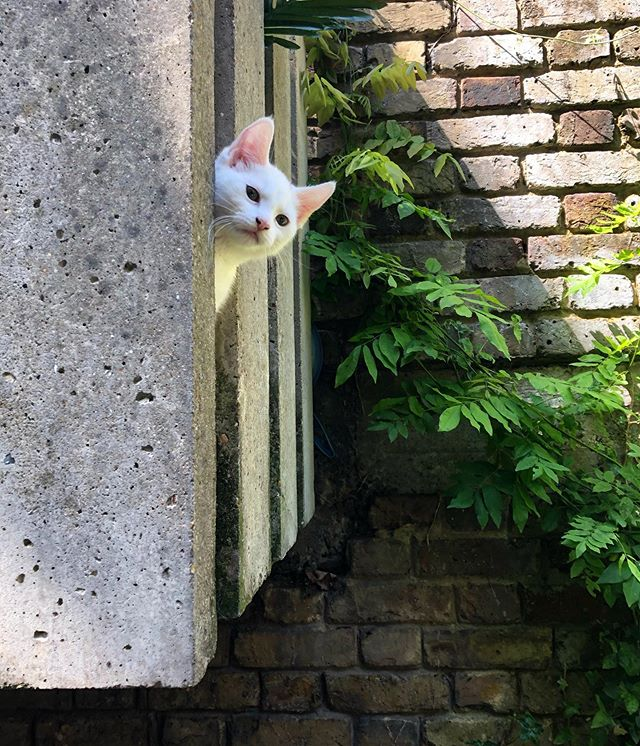 Site Visit  #sitevist #lifeofanalmostarchitect #project #concrete #texture #brick #plants #shadow #light #kitten #nosy #being watched