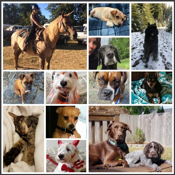 Pet Collage.jpg