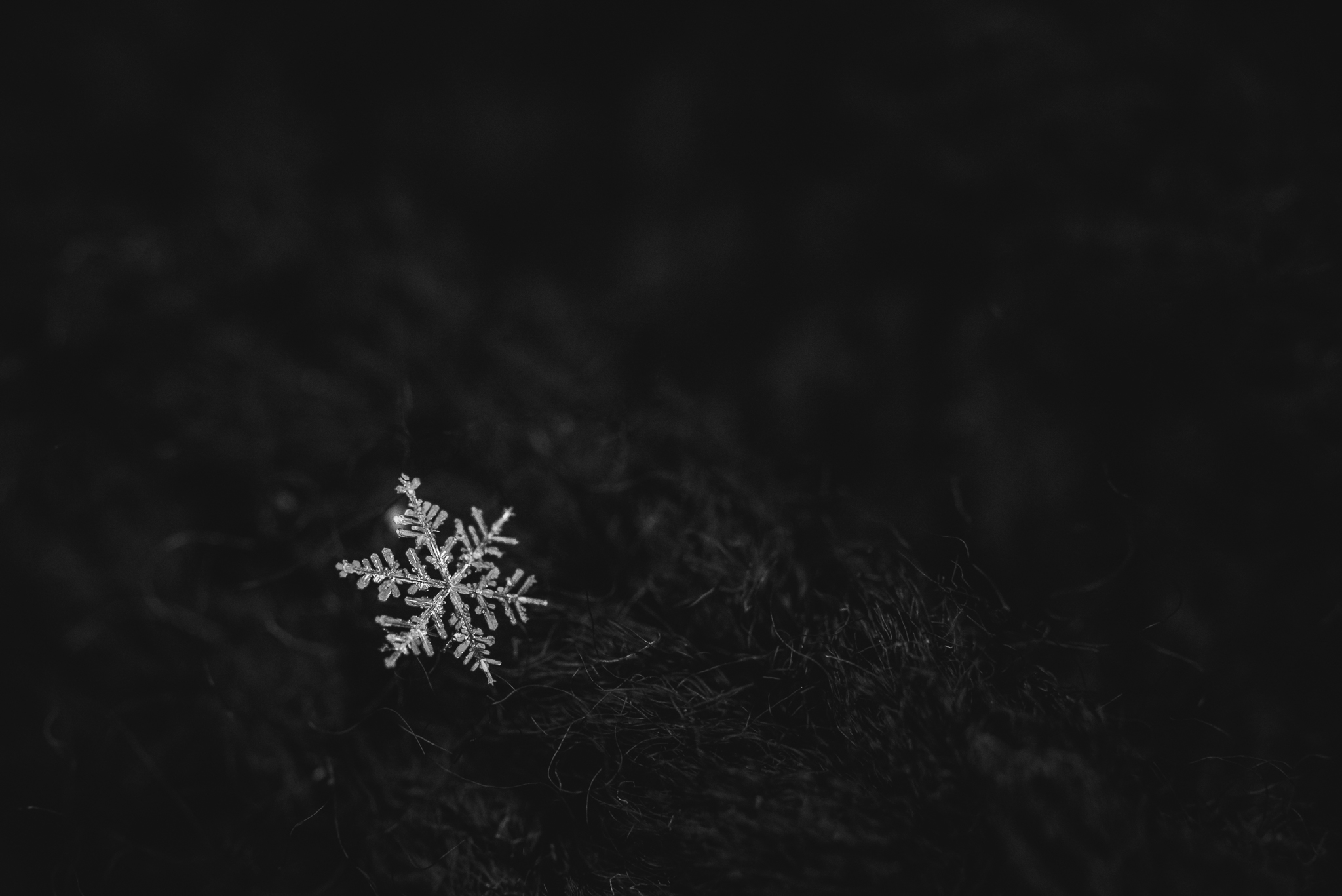 macro-image-of-snowflake-in-black-and-white