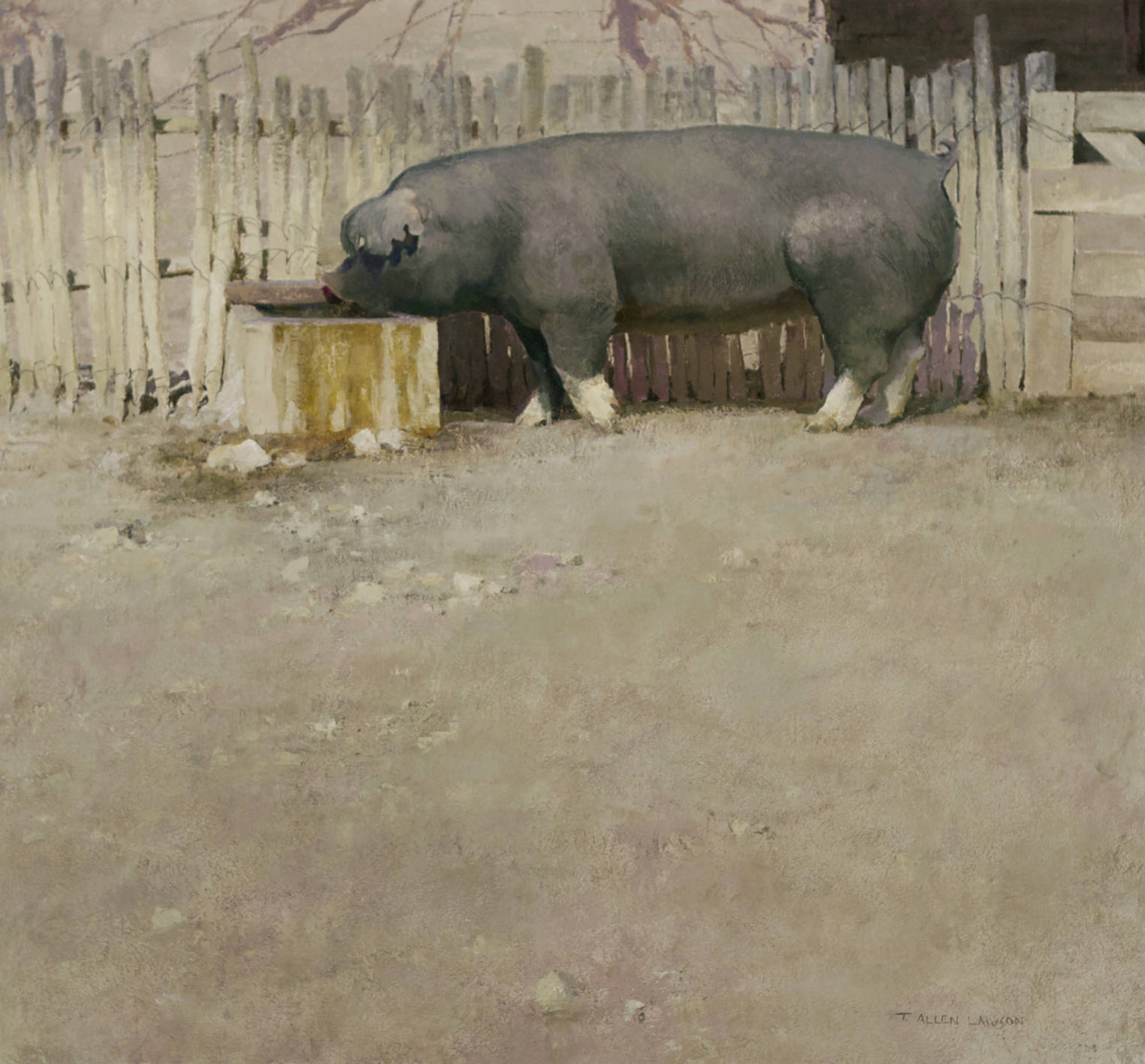 Pig, oil on linen, 26 x 28 in.