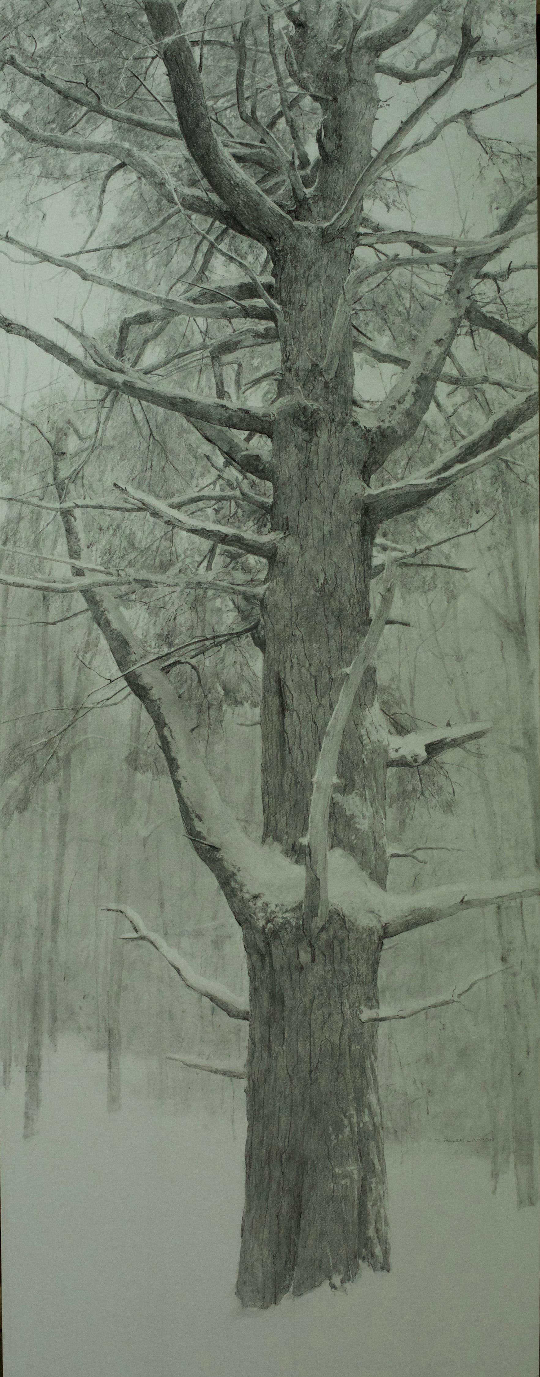 """""""Interior Pine"""" graphite on paper, 54 x 24 in., 2016"""