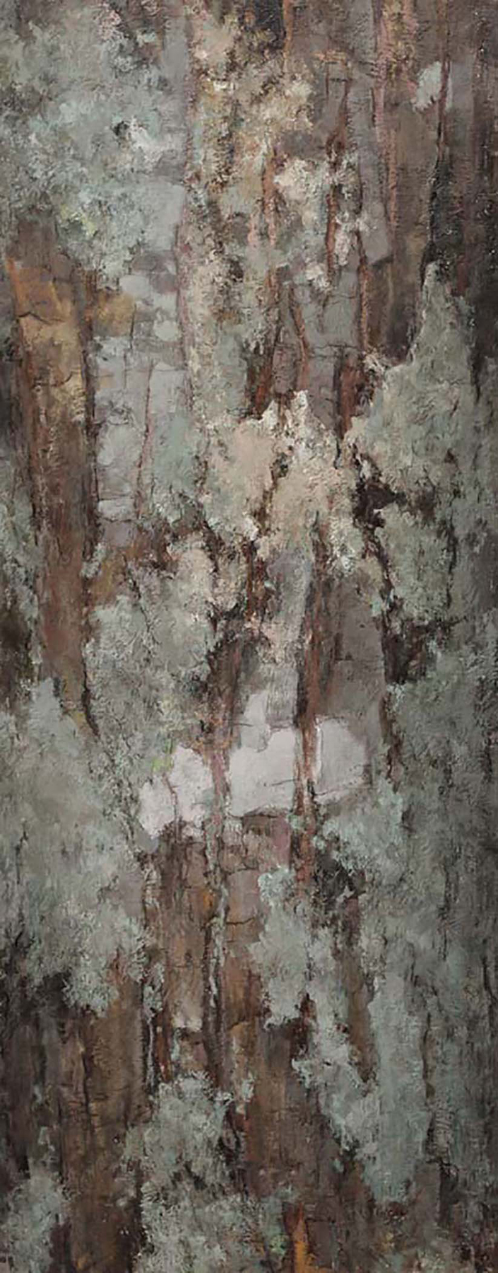 Bark - Red Oak
