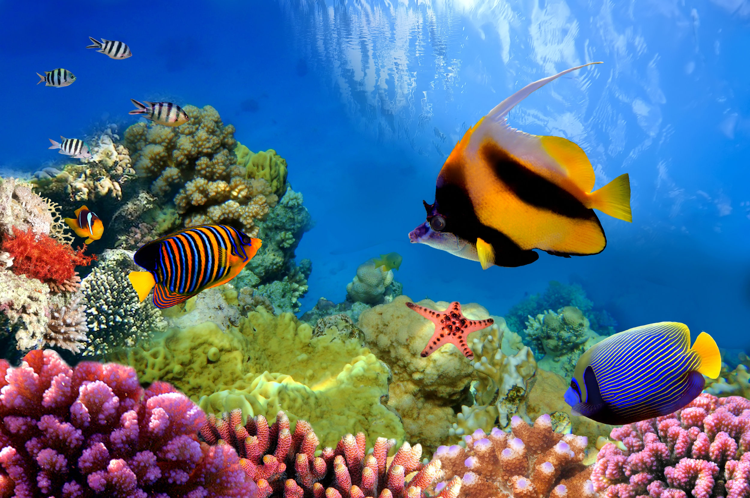 11.Now that's huge! - The planet's largest living structure is the Great Barrier Reef. The Great Barrier Reef is 132,974 square miles in size and it's the only object made by living beings that can be seen from space! I definitely will be visiting here some day to dive on the reef.