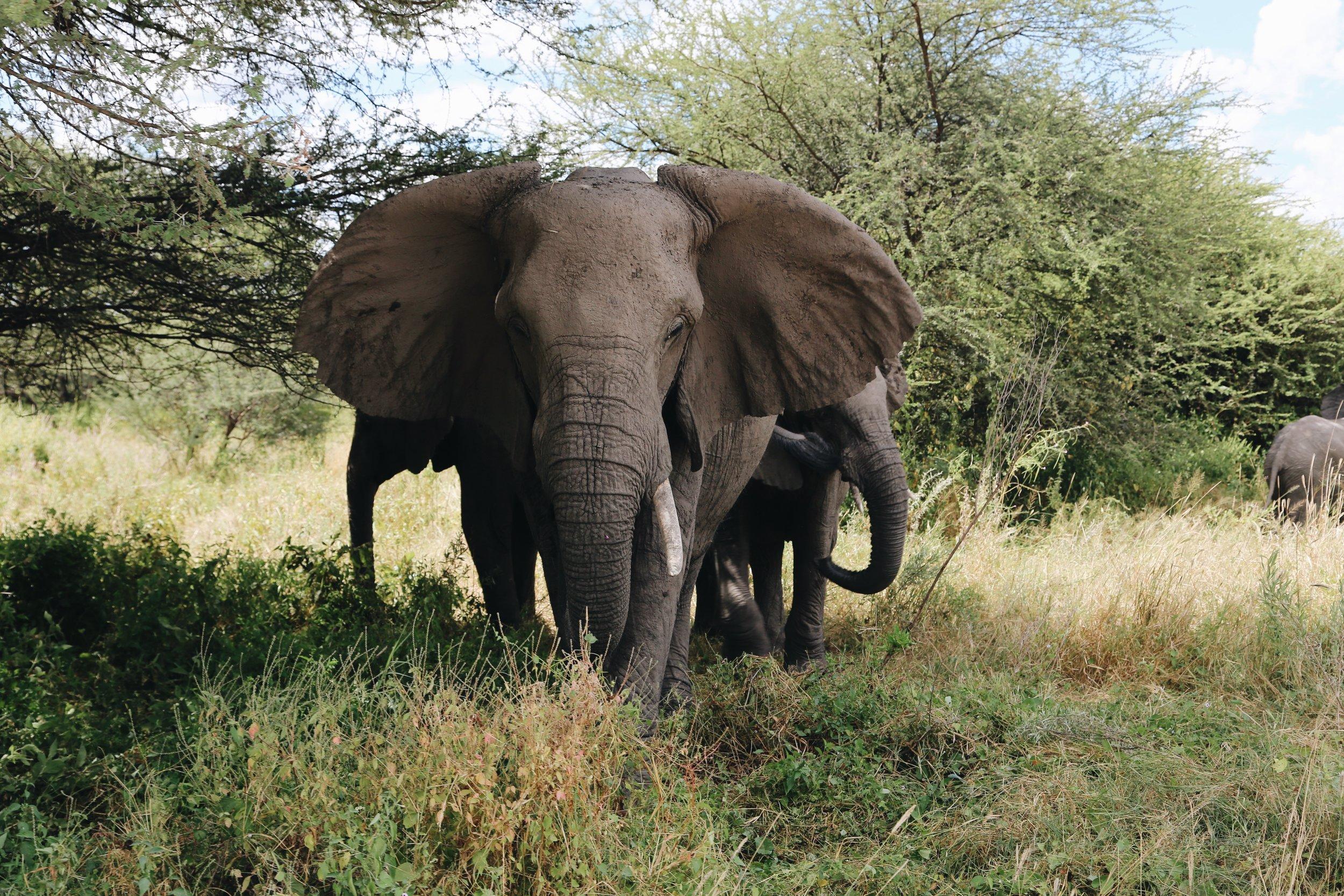 Moremi Reserve, Botswana