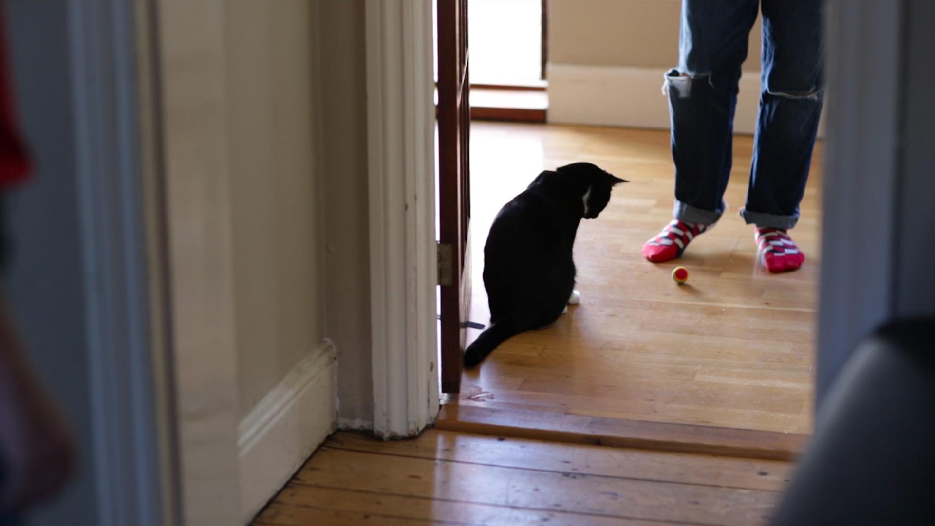 TheBrightonKop_23_CatFootball.jpg