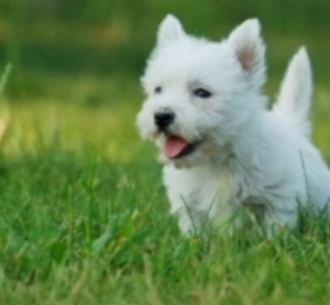 puppypacks-lifestyle-700x649.jpg