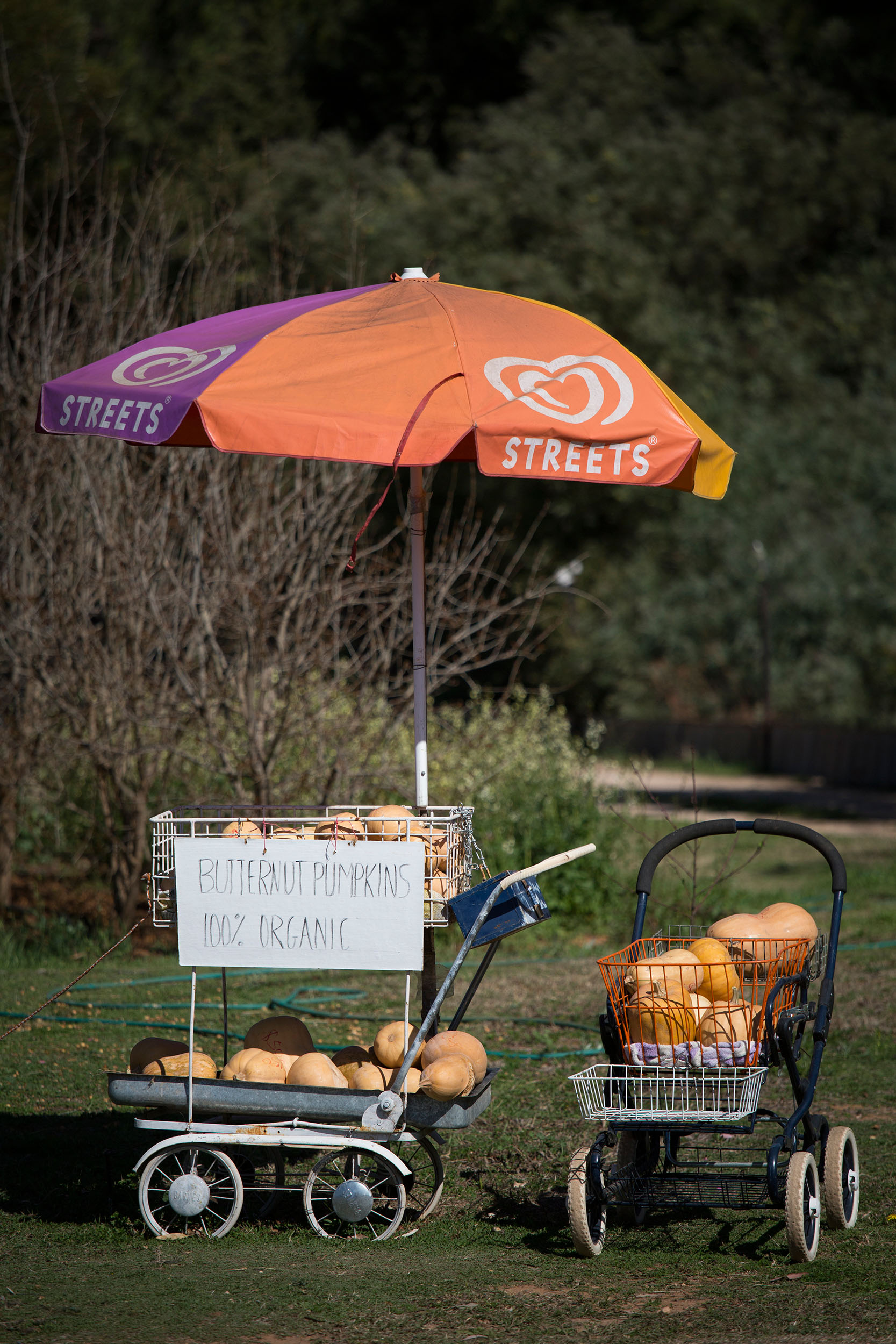 Roadside stall selling pumpkins, Mildura, Victoria.