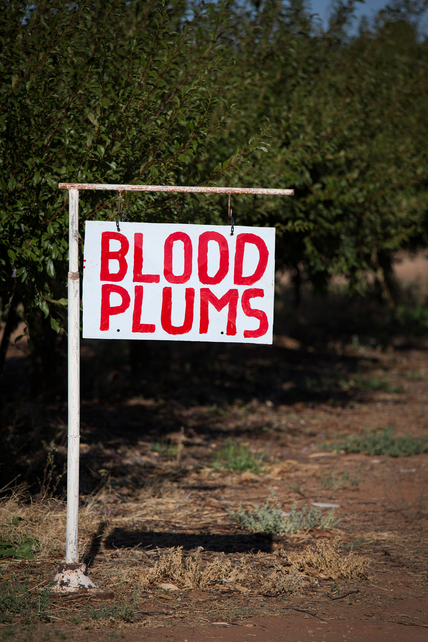 Roadside stall sign, Mildura, VIC.
