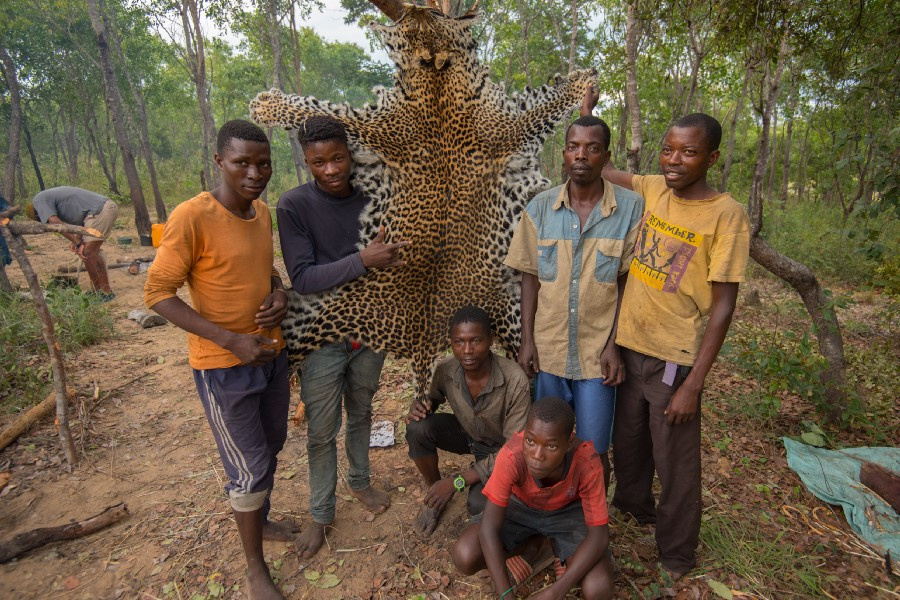 Hunters also target carnivores whose skin, bones and meat fetch a price at local markets. Photo: Chris Boyes