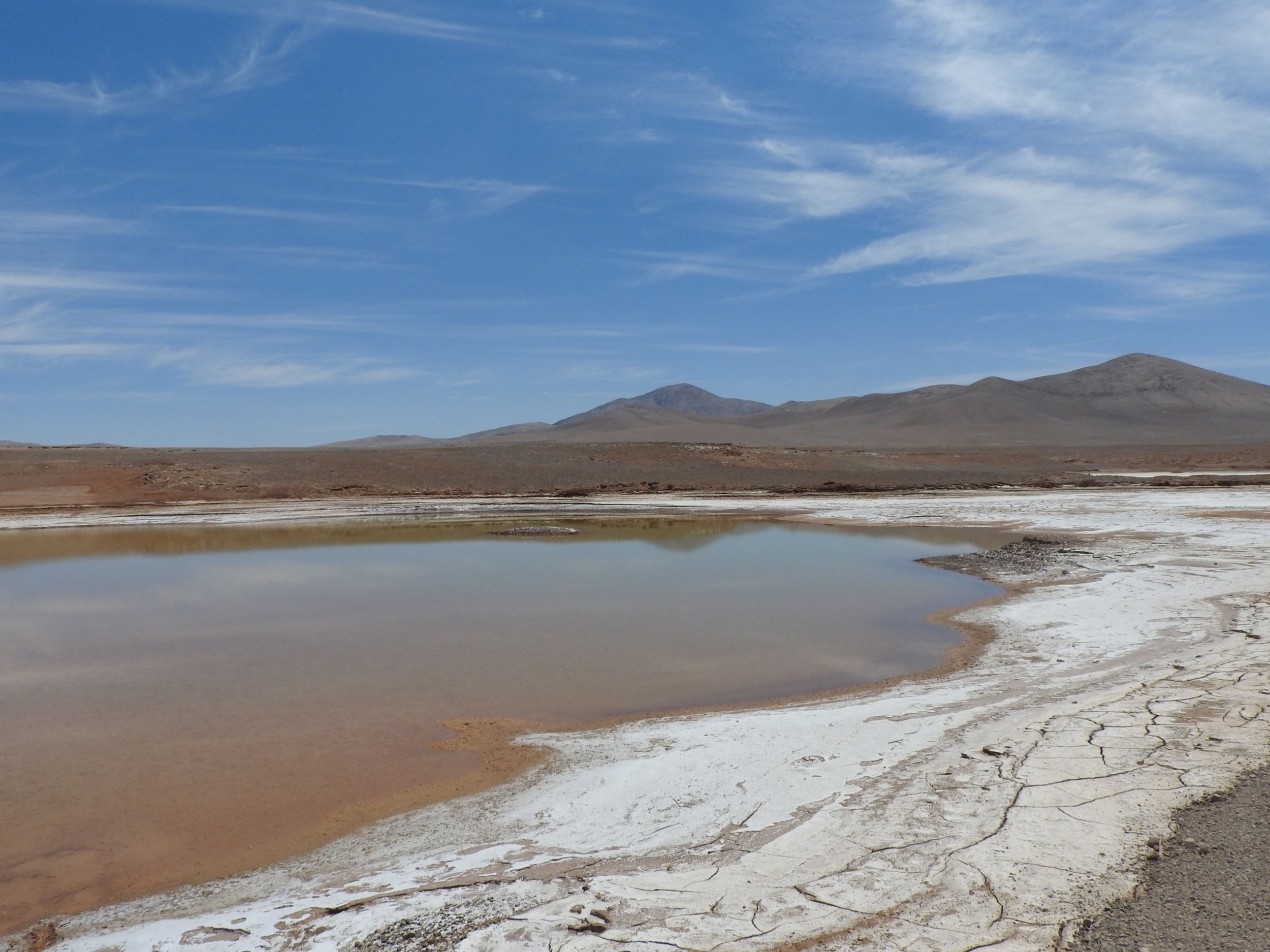Never-before-seen lagoons created by recent freak storms in Chile's Atacama Desert have killed a majority of its soils' microbial life. This photo was taken after rains in 2017. All images courtesy of Armando Azua-Bustos.