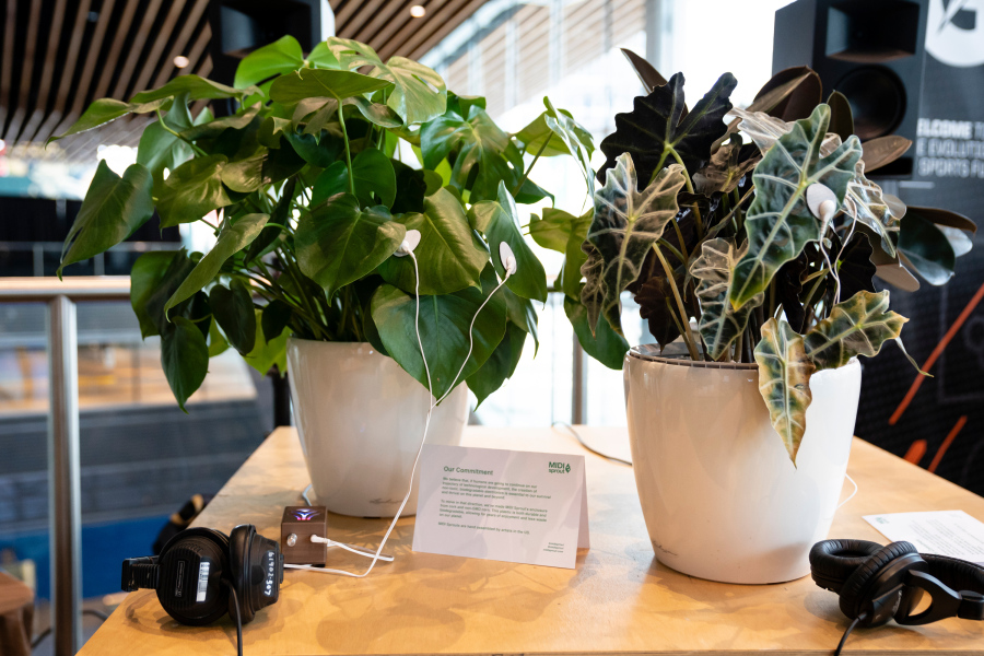 These two plants are part of the  Data Garden Quartet , a collection of potted plants that wear special sensors to measure their conductivity — and turn it into music. Data Garden appeared at TED2019: Bigger Than Us, April 15–19, 2019, Vancouver, BC, Canada. Photo: Marla Aufmuth / TED