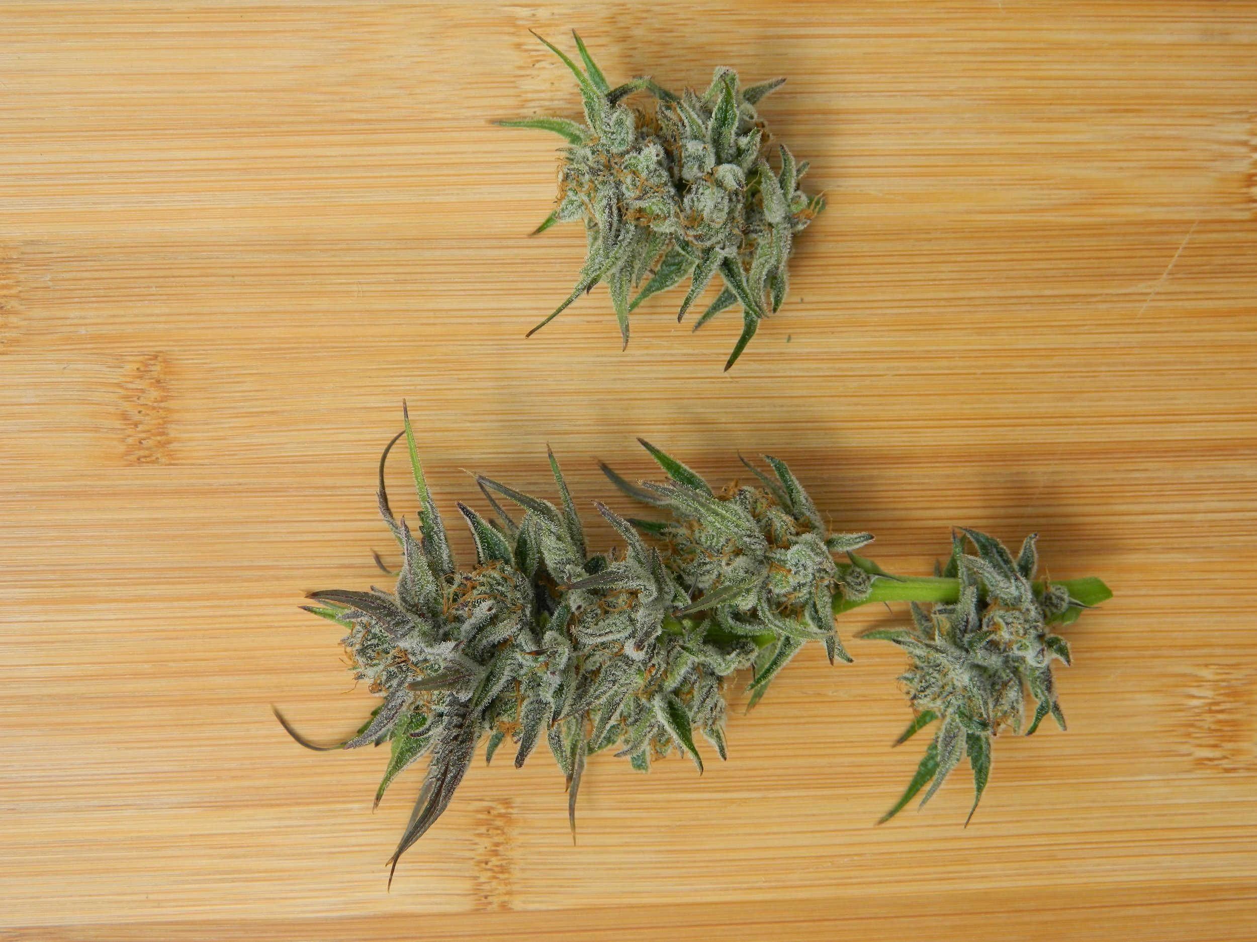 Conspiracy Kush - Parent Strains:Space Queen x Obama Kush.Characteristics:Relaxed, creative, uplifting, and enhanced.Useful for:Pain, stress, sleep, and headaches.Flavor Profile: Fruity, citrus, berry, tangy, pepper, skunky.