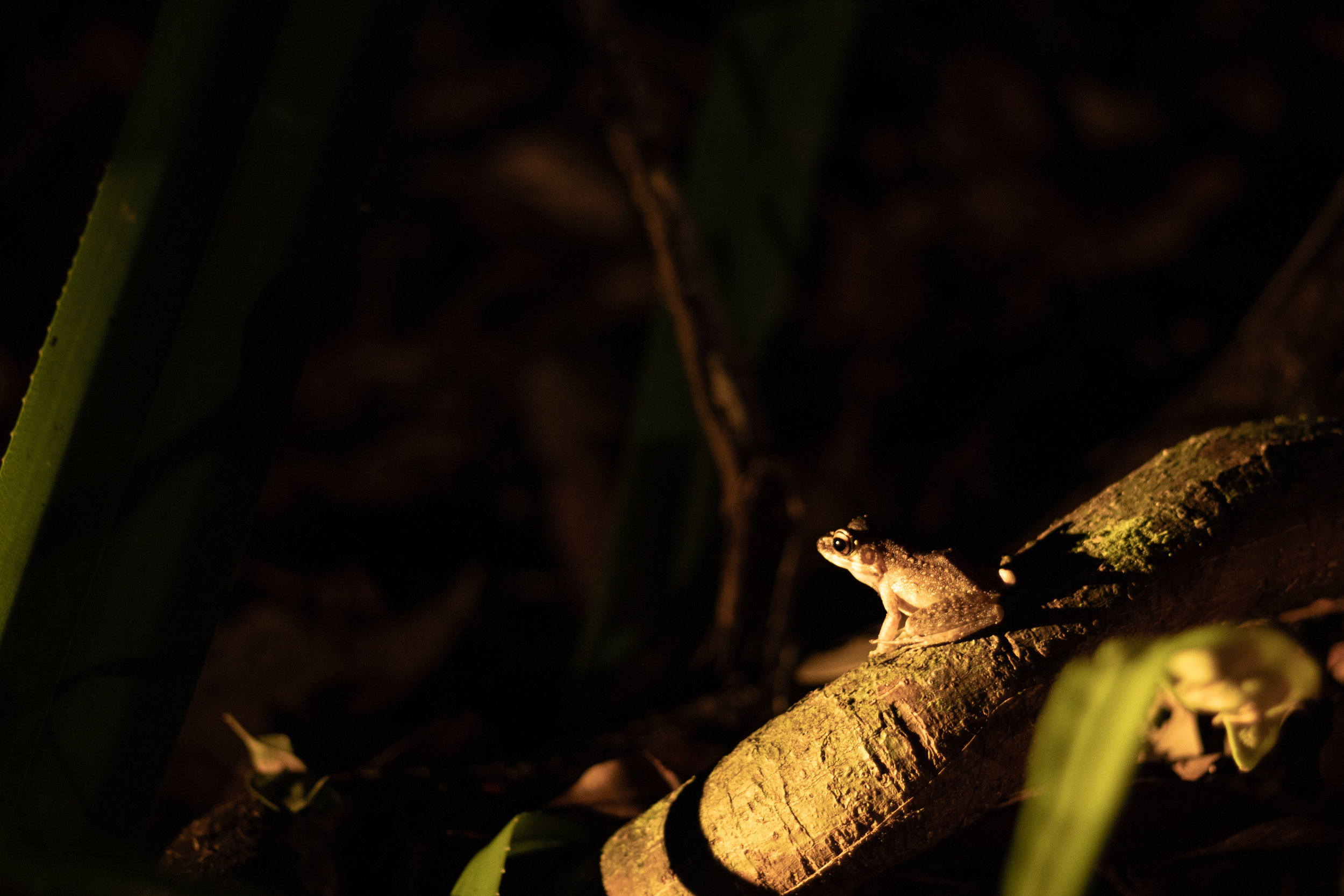 Bako National Park-24.jpg