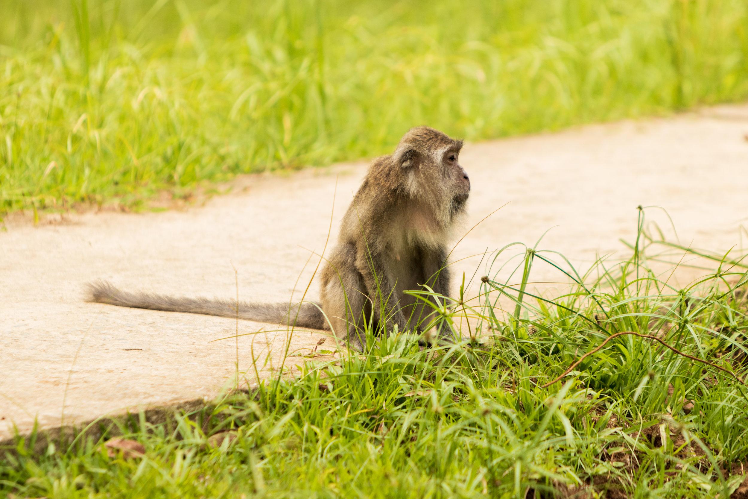 Best of Bako National Park-7.jpg