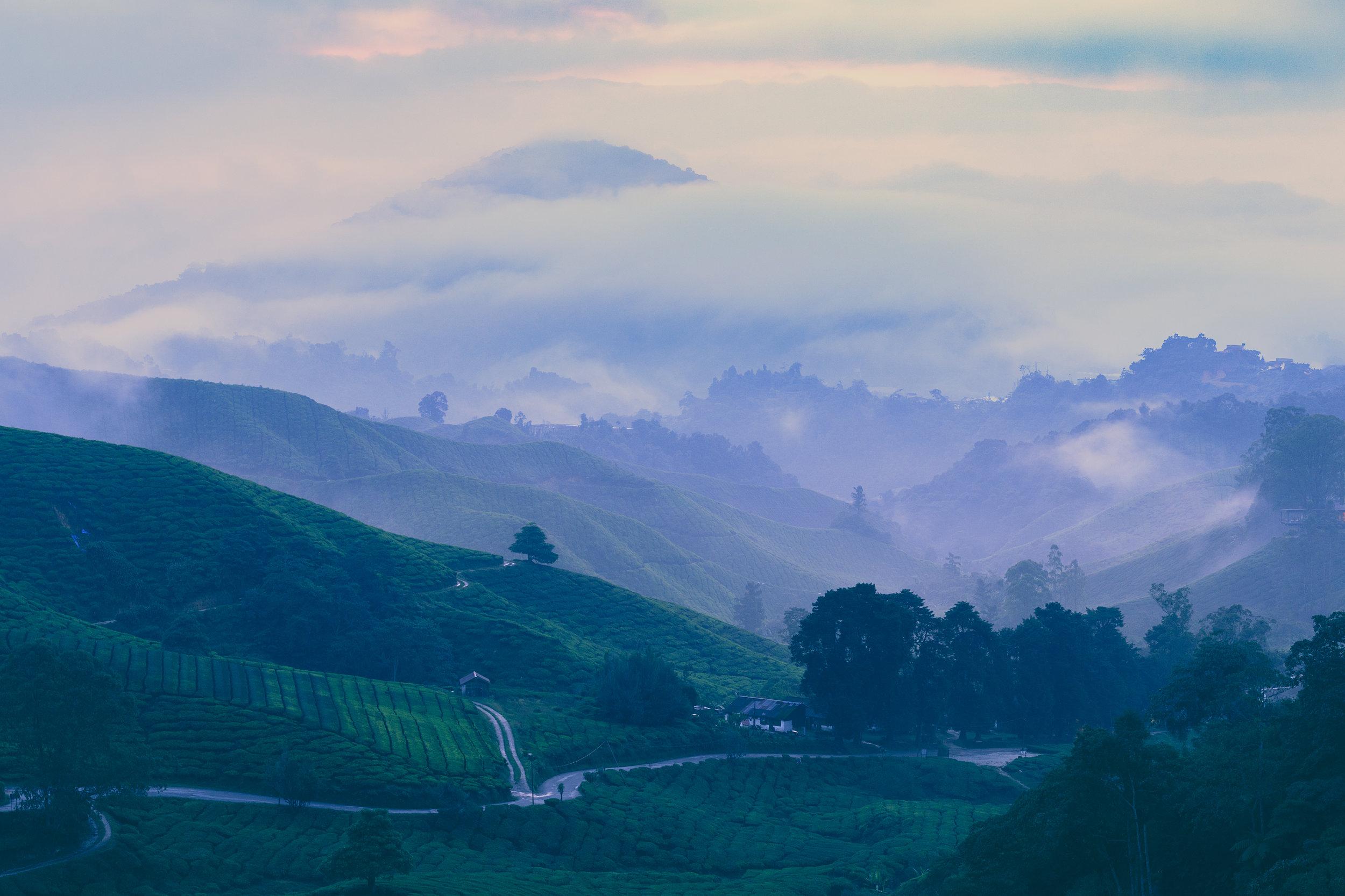 Cameron Highlands-1.jpg