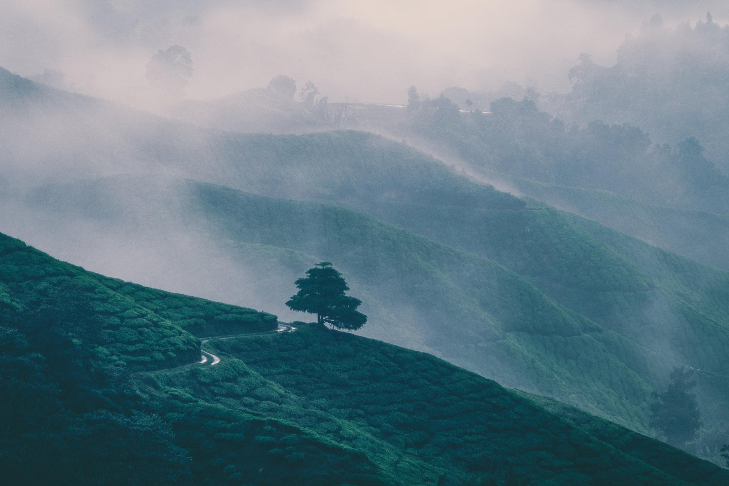 Cameron Highlands-2.jpg