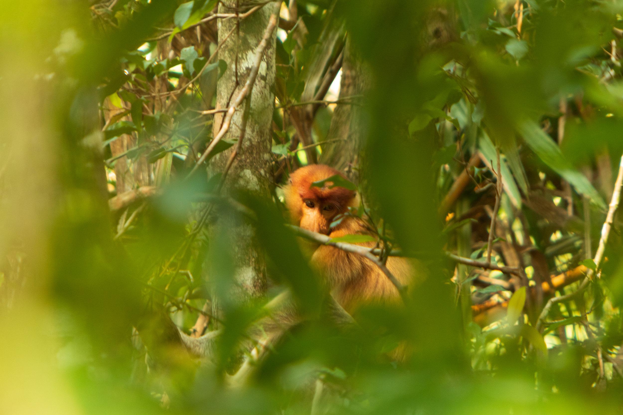 Bako National Park-17.jpg