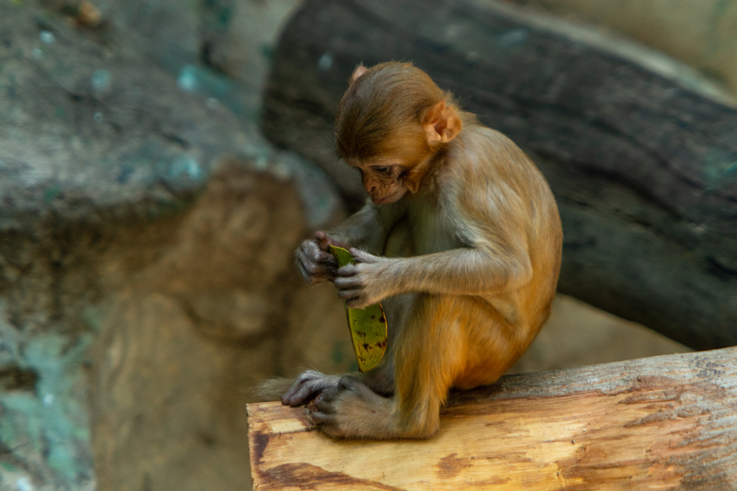 Chiang Mai Zoo-16.jpg