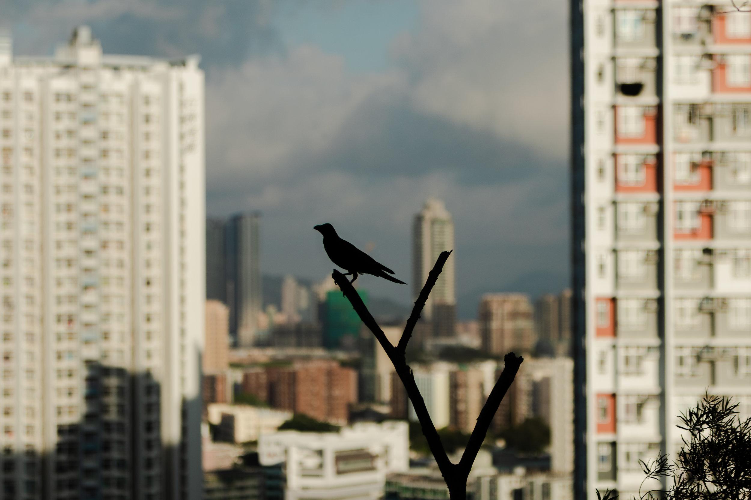 Hong Kong-56.jpg