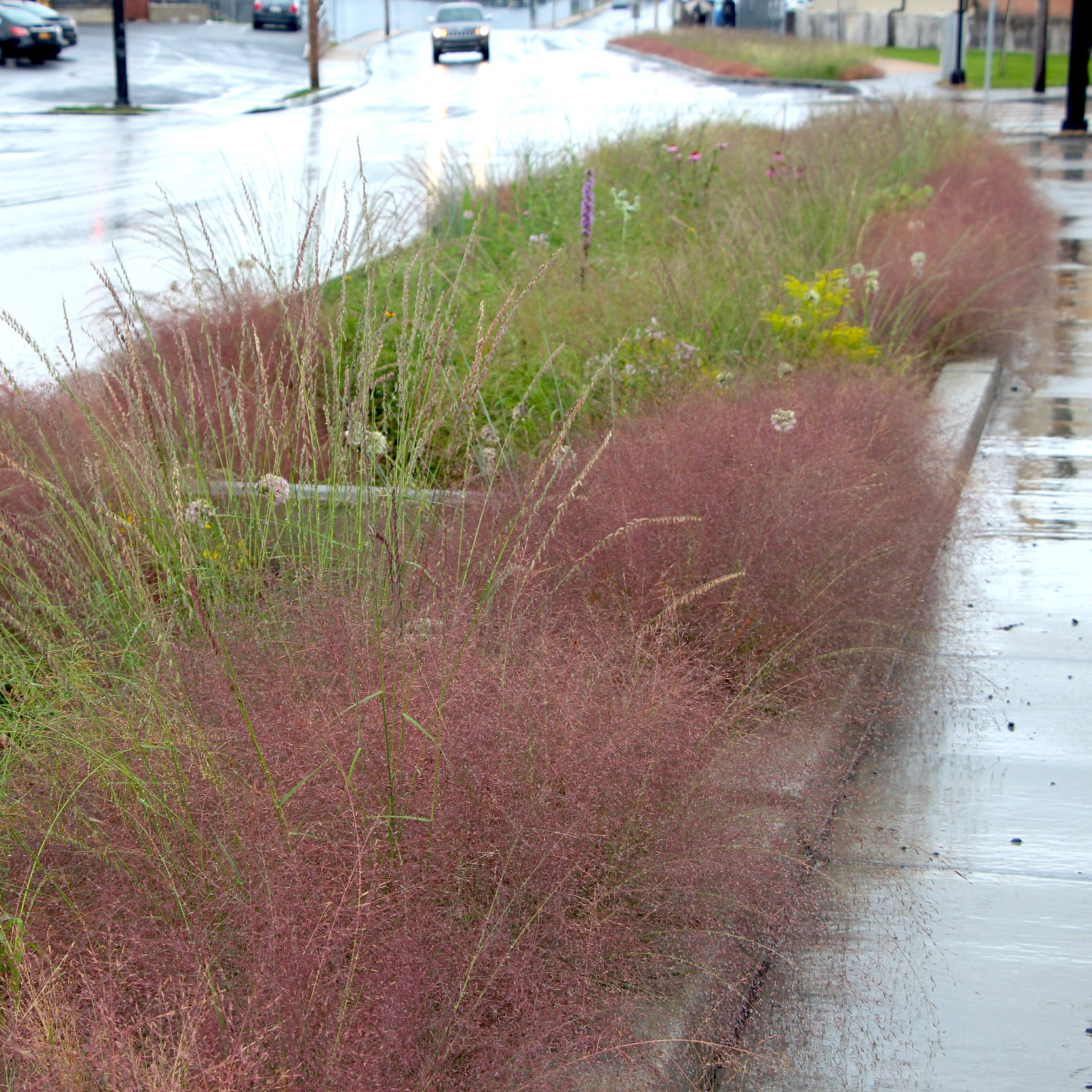 GREEN INFRASTRUCTURE - Cleaning Water with Plants